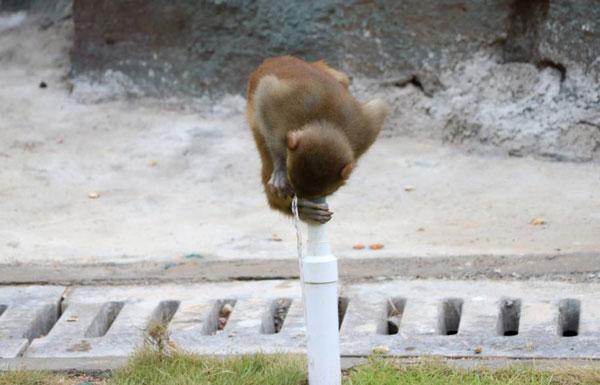 石牛寨猴王谷,猕猴表演