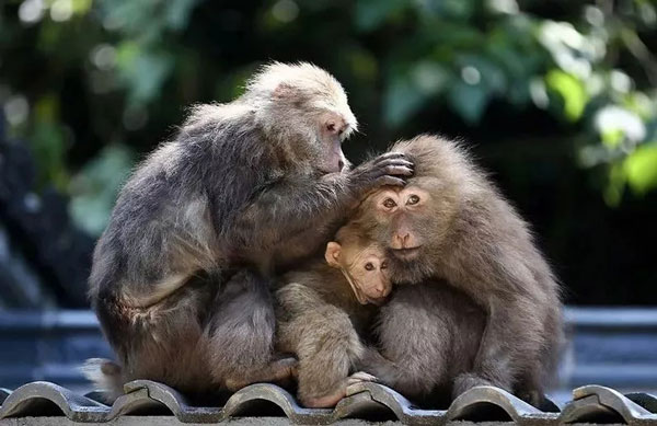 石牛寨春节游玩活动,石牛寨猴王谷