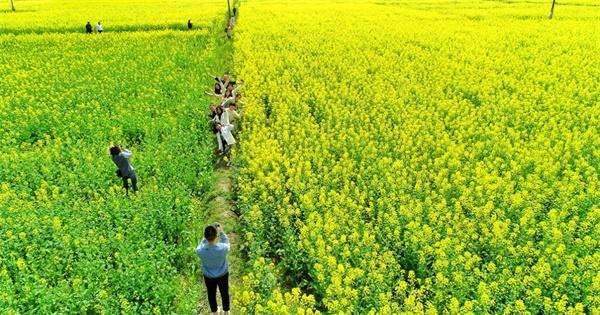 中惠旅邀您一同赏油菜花,今日花朝节:往后余生,皆是花期