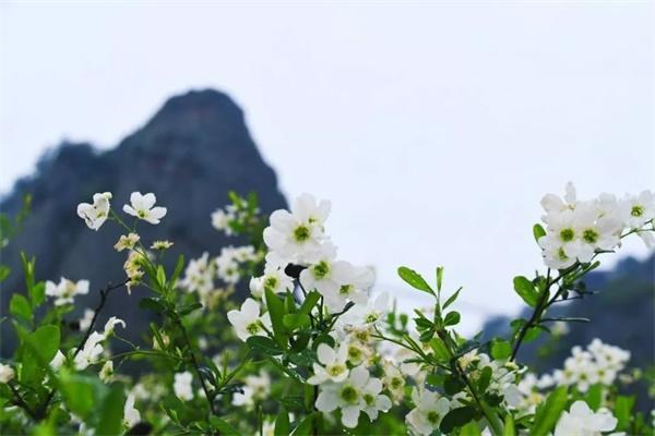 ¥69.9限时抢平江石牛寨套票 打卡网红景点 寻找春天气息!