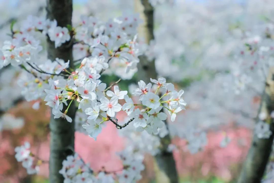 最美人间四月天,来岳阳天岳幕阜山纵享春日美好!