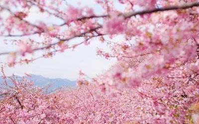 三月赏花季,岳阳春游最美时刻!岳阳油菜花樱花等你来踏青!