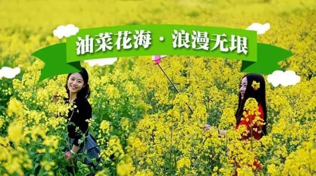 石牛寨油菜花